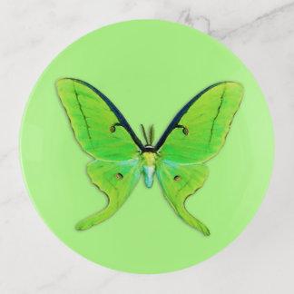 Vide-poche Mite de Luna - vert de chaux sur un pâle - arrière