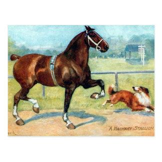 Vieille carte postale - étalon de Hackney