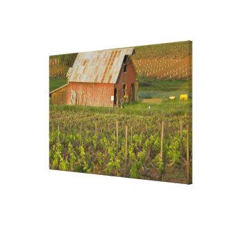 Vieille grange rouge au bord du vignoble Zinfandel Toiles