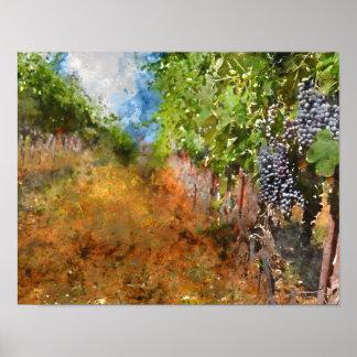 Vignoble dans Napa Valley la Californie Poster
