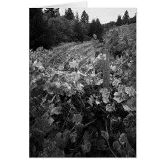 Vignoble et collines, Draper Vineyard, 1966 Carte De Vœux