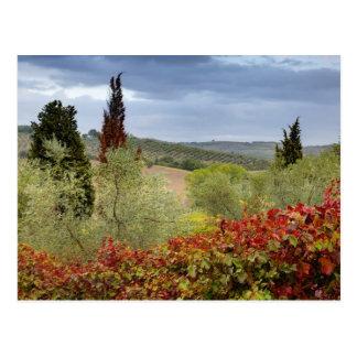 Vignoble près de Montalcino, Toscane, Italie Cartes Postales