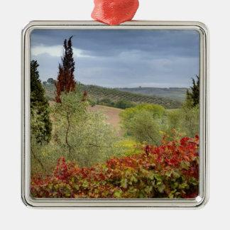 Vignoble près de Montalcino, Toscane, Italie Ornement Carré Argenté
