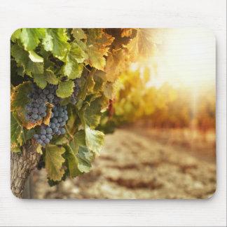 Vignobles au coucher du soleil tapis de souris