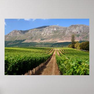 Vignobles de domaine de vin de Groot Constantia Posters
