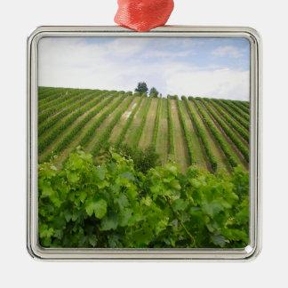 Vineyard - Vignoble (Bordeaux - France) 02 Ornement Carré Argenté