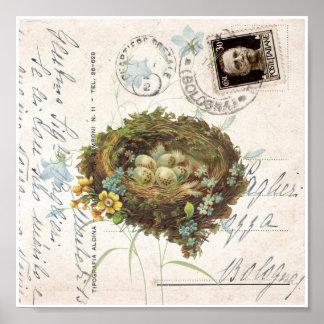 Vintage Nest Flowers Italian Postcard Art Print Poster