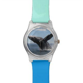 Violation adulte de baleine de bosse montres