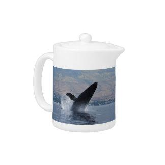 violation de baleine de humback