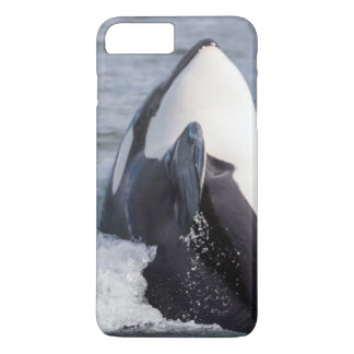 Violation de baleine d'orque coque iPhone 7 plus