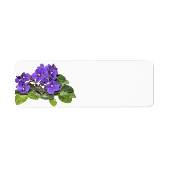 Violette africaine étiquette d'adresse retour
