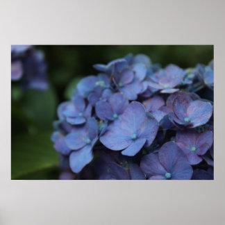 Violette en affiche crépusculaire posters