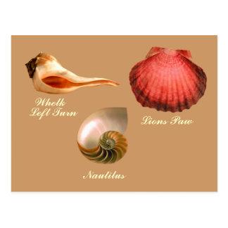 Virage à gauche de buccin, Nautilus, patte de Carte Postale