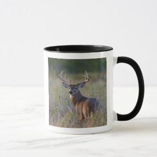 virginianus blanc-coupé la queue d'Odocoileus de Mug