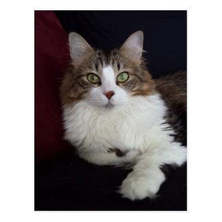 Visage de chat carte postale