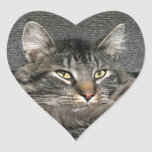 Visage de chat de ragondin du Maine Autocollant En Cœur