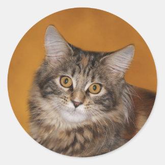Visage de chaton de ragondin du Maine Sticker Rond