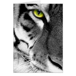 Visage de tigre - tigre blanc - tigre de yeux - cartes