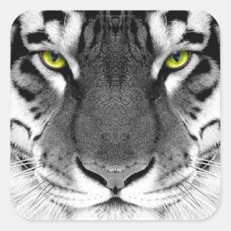 Visage de tigre - tigre blanc - tigre de yeux - sticker carré