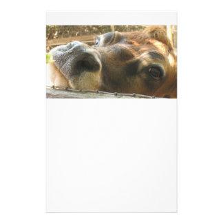 Visage de vache stationnaire motifs pour papier à lettre