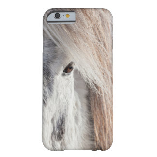 Visage islandais blanc de cheval, Islande Coque iPhone 6 Barely There