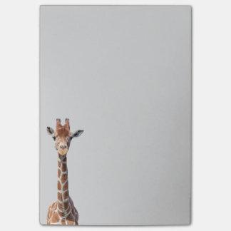 Visage mignon de girafe