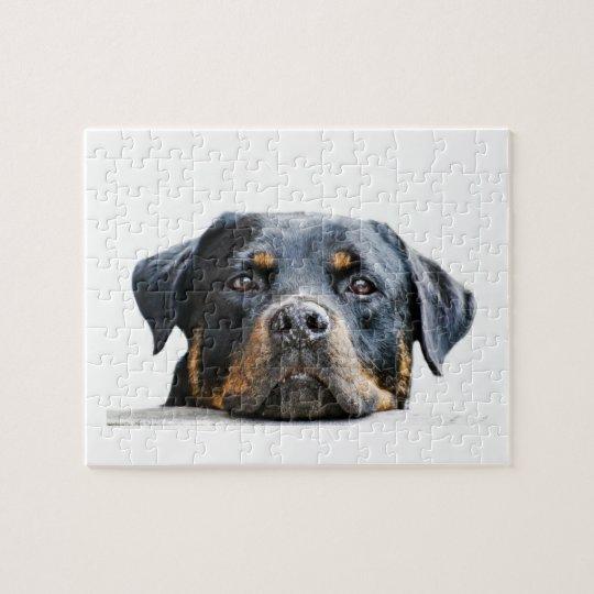 Visage mignon de race de chien du rottweiler | puzzle