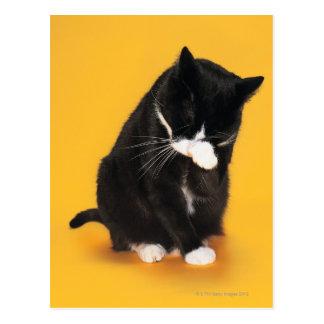Visage noir et blanc de nettoyage de chat avec la carte postale