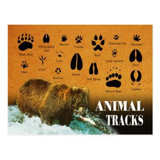 Voies animales cartes postales