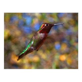 Vol de colibri carte postale