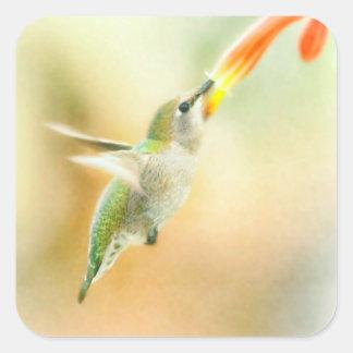 Vol de début de la matinée de colibri sticker carré