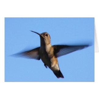 vol du colibri 3aJ dans un ciel bleu Carte De Vœux