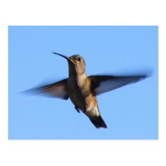 vol du colibri 3aJ dans un ciel bleu Carte Postale
