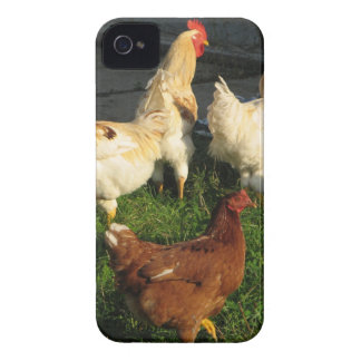 Volaille Coques iPhone 4