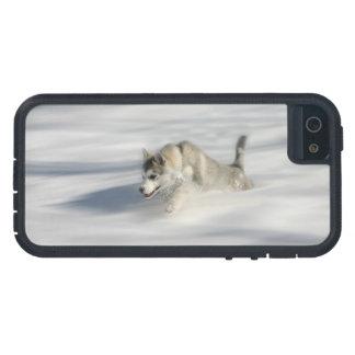 Voler dans un rêve de Huskys - cas de l'iPhone 5 Coque Case-Mate iPhone 5