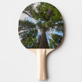 Voûte de sapin de Douglas Raquette Tennis De Table