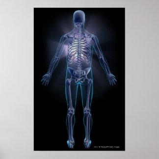 Vue arrière d'un squelette humain posters