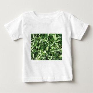 Vue courbe de plante sage dans le jardin t-shirt pour bébé