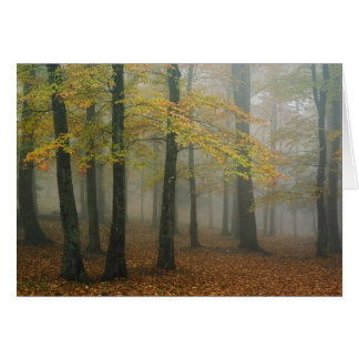 Vue d'automne de forêt brumeuse, grand-père 3 carte de vœux