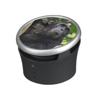 Vue de chimpanzé (troglodytes de casserole) dans haut-parleur