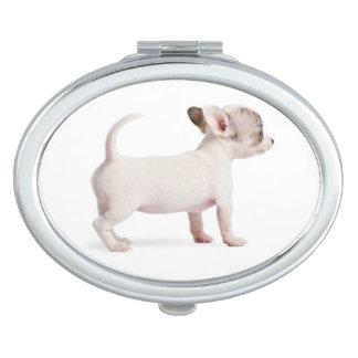 Vue de côté de chiot de chiwawa (10 semaines de) miroir de poche