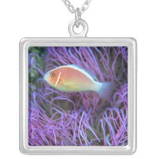 Vue de côté d'un poisson d'anémone rose, pendentif carré