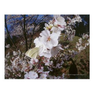 Vue de Fisheye de papillon sur la fleur Cartes Postales