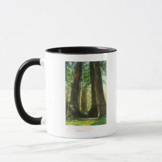 Vue des jumeaux de séquoia au grand verger d'arbre mug
