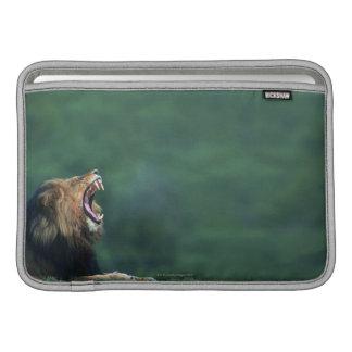 Vue d'un lion (Panthera Lion) ouvrant sa bouche Poche Macbook