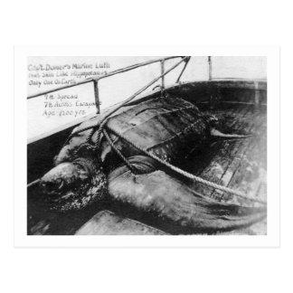 Vue d'une tortue de mer géante en captivité carte postale