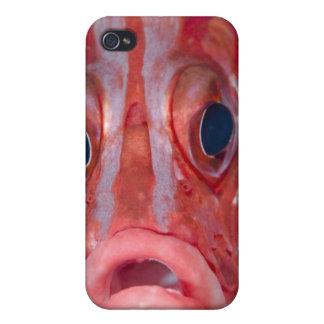 Vue frontale en gros plan de squirrelfish coloré étui iPhone 4