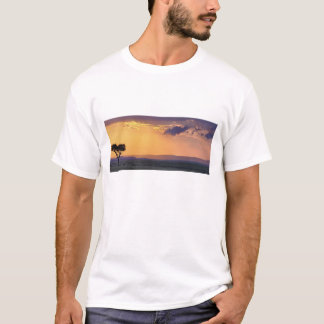 Vue panoramique d'arbre simple d'acacia à t-shirt