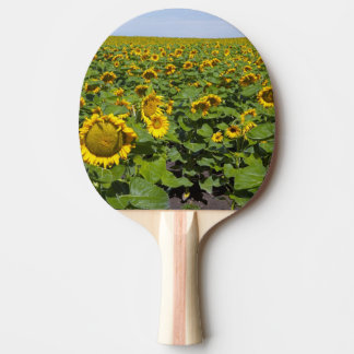 WA, le comté de Kittitas, gisement de tournesol Raquette Tennis De Table
