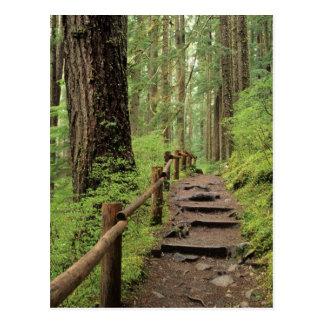 WA, NP olympique, vallée de solénoïde Duc, forêt Cartes Postales